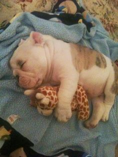 5 Adorable puppies cuddling with stuffed toys | Pic#04