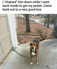 They tricked him but nonetheless what a good doggy!!