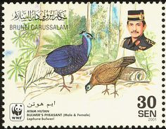 Bulwer's Pheasant stamps - mainly images - gallery format