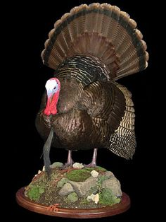 Turkey Taxidermy Classes or School on Video DVD - Save $$$ or Earn $$$ by mounting your own trophies!