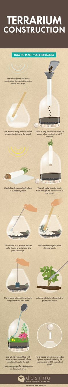 The Terrarium Guide - Constructing Your Terrarium                                                                                                                                                                                 More