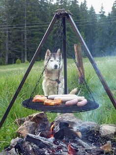 Huskytrekking Ibergeregg 2015 Husky, Outdoor Furniture, Outdoor Decor, Home Decor, Decoration Home, Room Decor, Husky Dog, Interior Decorating, Outdoor Furniture Sets