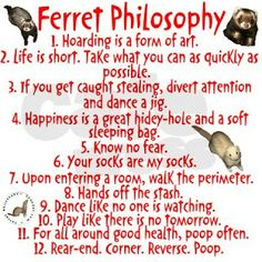 Definition of the ferret philosophy x'D Ferrets Care, Funny Ferrets, Baby Ferrets, Ferret Toys, Pet Ferret, Funny Animals, Cute Animals, Funniest Animals, Funny Cute