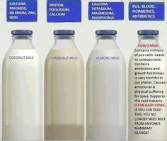 What best to drink vs Coconut milk, Hazelnut milk, Almond milk & Cow's milk
