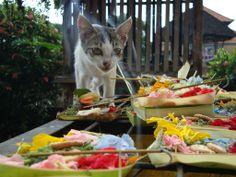 A Cat in Bali