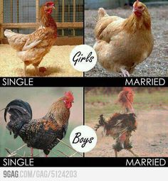SingleXMarriage