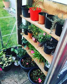 @Shelmarie82 - Finally moved all my remaining plants into the greenhouse. Winter prep on its way. Marie uses a Hybrid™ 6x4 polycarbonate greenhouse.