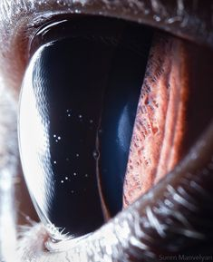 Close-up photos of animal eyes.