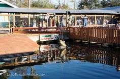 The best park for young kids in Orlando – Gatorland