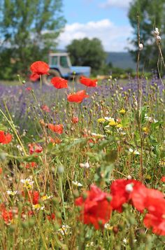wild flowers growing in the field with a tractor off in the distance Most Beautiful Words, Simply Beautiful, Growing Flowers, Planting Flowers, Provence, Country Life, Country Charm, Country Living, Champs
