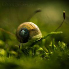 Little Snail . II by *Somebody--else on deviantART