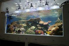 Home Aquarium Ideas: The Aquarium Buyers Guide cool home aquarium