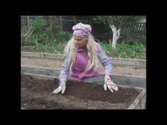 Высаживаем огурцы в траншею - YouTube