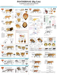 drawing, tutorial, cats, tigers, lions, leopards, lioness, diy, how-to