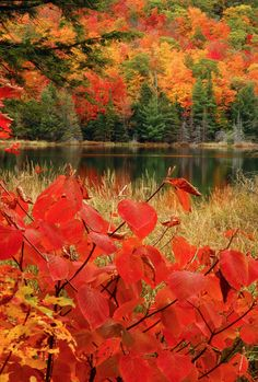 """coiour-my-world: """" Coloured leaves in autumn at Lac Fortune, Gatineau Park, Quebec, just outside Ottawa, Canada ~ Richard McGuire """""""