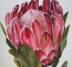 Protea Art, Protea Flower, Watercolor Flowers, Watercolor Art, Drawing Flowers, Free Paper Flower Templates, Still Life Oil Painting, Calendar Design, Mini Paintings