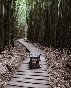 Bamboo forest.  Wilders can be made with black leather on special request. Just mention it in your notes at checkout!  #liveadventurously by bradleymountain