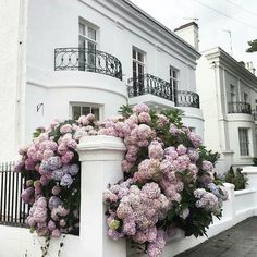 Regard the much needed froth that these uncontrollable Hydrangea's  add to this static street scene.