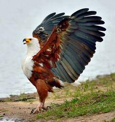 Excellent Eagle photo