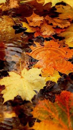 Find images and videos about nature, colors and autumn on We Heart It - the app to get lost in what you love. Autumn Rain, Autumn Leaves, Autumn Scenery, Autumn Aesthetic, Fall Wallpaper, Bts Wallpaper, Autumn Photography, Fall Pictures, Autumn Inspiration