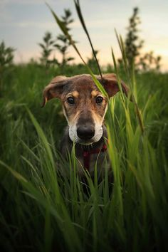 Lovely dog portrait | Content in a Cottage // love this picture, this dog is so cute!!