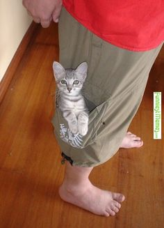 pussy in my pocket