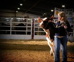 "Answering the age old Livestock Show question, ""Can I pet your cow?"" this is an awesome blog post by Miss Danielle Beard, and yes that is me in the picture. :)"