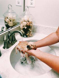 Ideas bath time dog golden retrievers – Cute Idee golden retriever per cani da bagno – Carine – Perros Golden Retriever, Chien Golden Retriever, Golden Retrievers, Retriever Puppies, Cute Funny Animals, Cute Baby Animals, Animals And Pets, Cute Dogs And Puppies, I Love Dogs