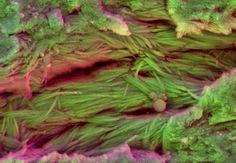 DDC-SEM of fossil - purple - 3.jpg