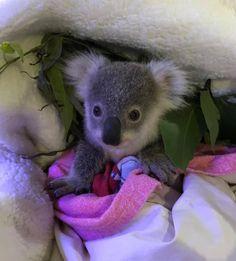 Bear, Cute, Sticks, Koalas, Bears, Kawaii