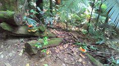 Floresta da Tijuca (RJ/Brazil)