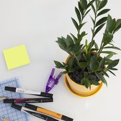 Table top picks: 8 Plants for Your Office Life x The Sill — theory of place