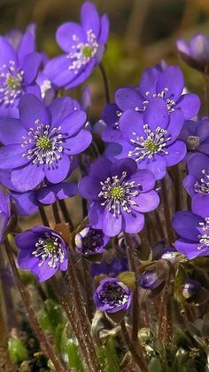 Best Photos Violet flower Popular Utilizing their beautifully shaped furred results in, their particular stream-lined framework as wel Exotic Flowers, Amazing Flowers, Purple Flowers, Spring Flowers, Paper Flowers, Wild Flowers, Beautiful Flowers, Flowers Nature, Small Flowers