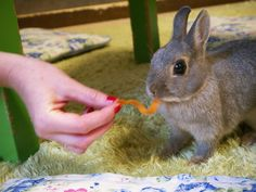 10 awesome things to do in Tokyo bunny cafe