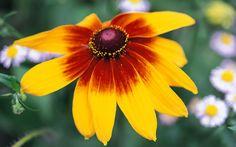 Beautiful! What is your favorite flower?  http://vinette.avonrepresentative.com/!