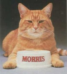 Morris the Cat was the mascot for the 9 Lives brand of cat food. Since the the stout orange tabby has been famously finicky in his food choices. Morris, time for din-din! I had a cat that looked like Morris not as big but same color and features. Animal Gato, Mundo Animal, My Childhood Memories, Best Memories, School Memories, Childhood Toys, Will Turner, Ed Vedder, Photo Vintage