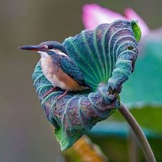 RHAPSODY IN BLUE ~ bird and flower in shades of blue, green, and violet.