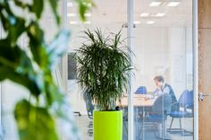 Office greenery blending seamlessly in an office environment - what a difference to the health and wellbeing of staff!