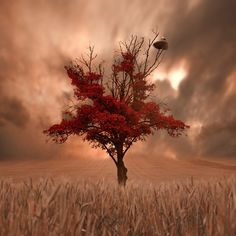 Red Tree with gorgeous sky in background