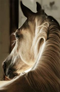 Eyelashes to die for & a centre parting.