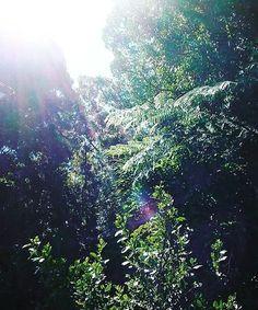 Northern Lights, Mountains, Nature, Instagram Posts, Travel, Color, Voyage, Colour, Aurora