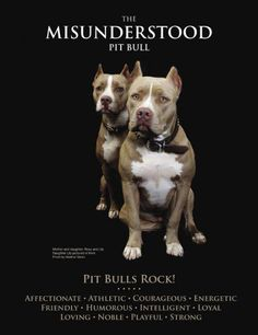 Pit Bulls.... Dogs are only a reflection of their owner and their environment.