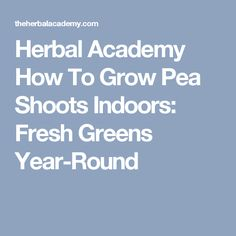 Herbal Academy How To Grow Pea Shoots Indoors: Fresh Greens Year-Round