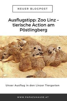 Wusstest du, dass es in Linz einen tollen, kleinen Tierpark gibt? Der Zoo Linz hat mehr zu bieten, als viele glauben!   #zoolinz #linzertierpark #zoobesuch #tierpark #linz #tiergarten #erdmännchen #ausflugstipp #ausflugsziel #oberösterreich #papablog #elternblog #familienblog King Julien, Teddy Bear, Animals, Beautiful, Traveling With Baby, Linz, Petting Zoo, Road Trip Destinations, Tips