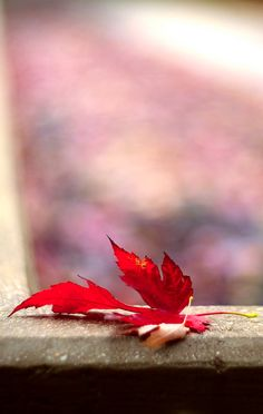 ♪ The falling leaves - drift by my window - the falling leaves - of red and gold ♪ ......