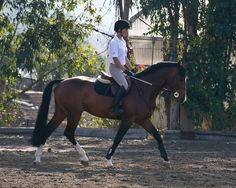 equitation light work horse