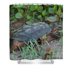 A very big wild turtle out for a stroll nature shower curtain.  Photography by Susan.