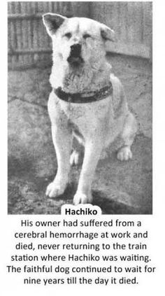 Hachiko_ Story #1__These are the stories of six dogs that will be remembered throughout history as being loyal beyond measure * There is a movie of Hachiko; A dogs tale_  staring  Richard Gere and Joan Allen. Very sad true story you'll need a box of kleenex to watch it