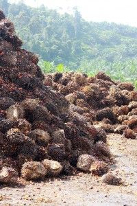 """""""Sustainable"""" Palm Oil Should Not Drive Deforestation by Calen May-Tobin from Union of Concerned Scientists"""