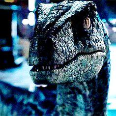 Loyal Blue Jurassic World